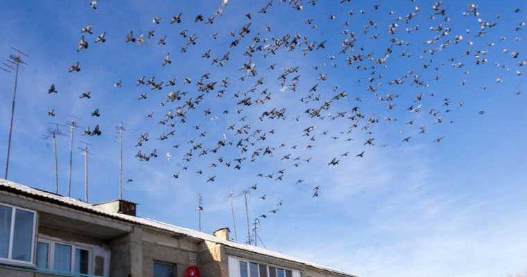 В Тобольске из-за шумозащитного забора гибнут птицы