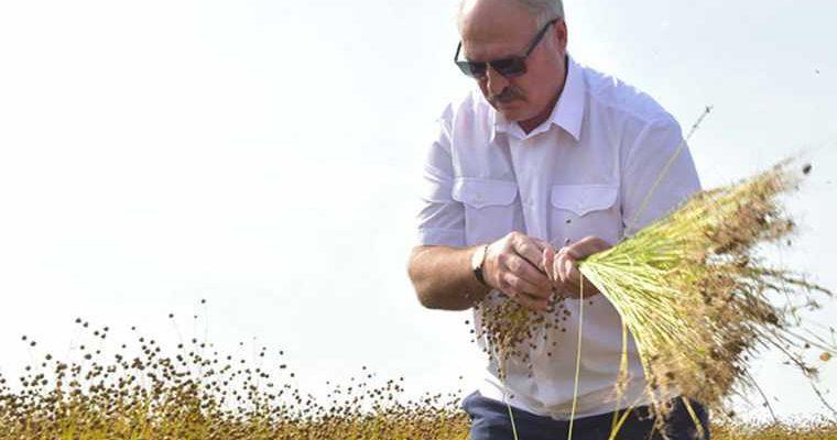 коронавирус Белоруссия Александр Лукашенко