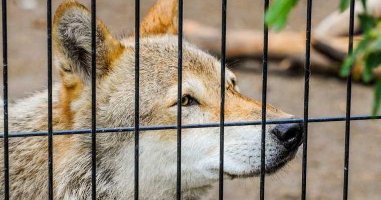 В Тюменской области устроили распродажу животных
