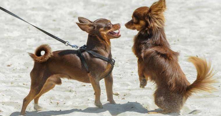 регистрация собак