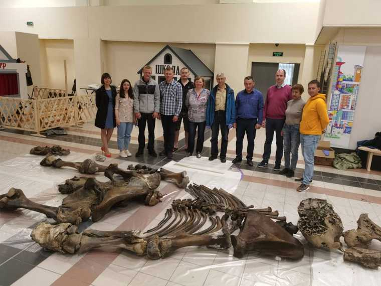 В ЯНАО показали скелет найденного в озере мамонта. ФОТО