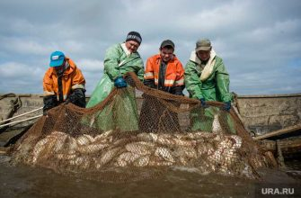ЯНАО соблюдение трудовых прав рыбопромысловые предприятия