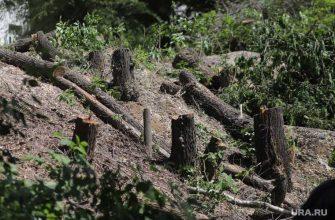 снос курганских деревьев