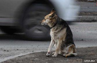 бездомные животные Курганская область