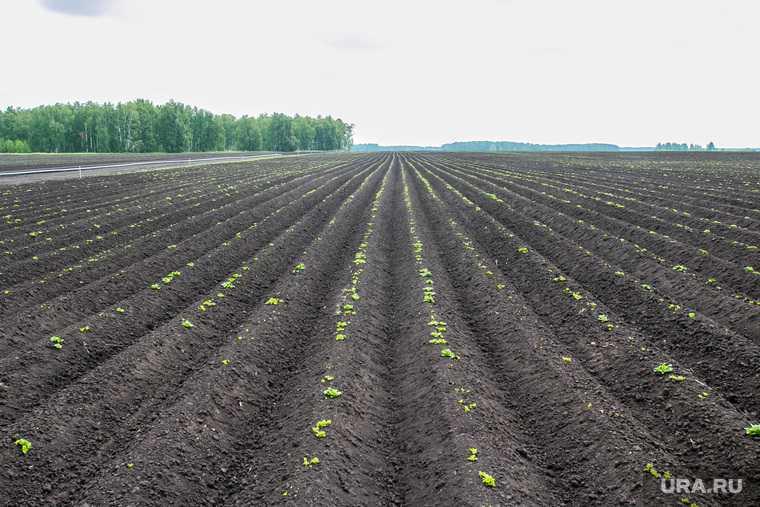 как регулируются цены на картошку продукты питания Агропром бизнес