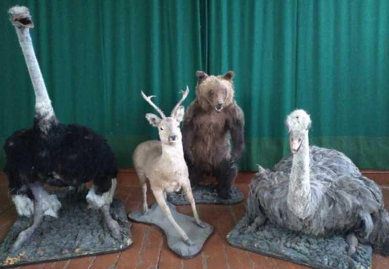Курганская страусиная ферма отдала детям чучела животных. Фото
