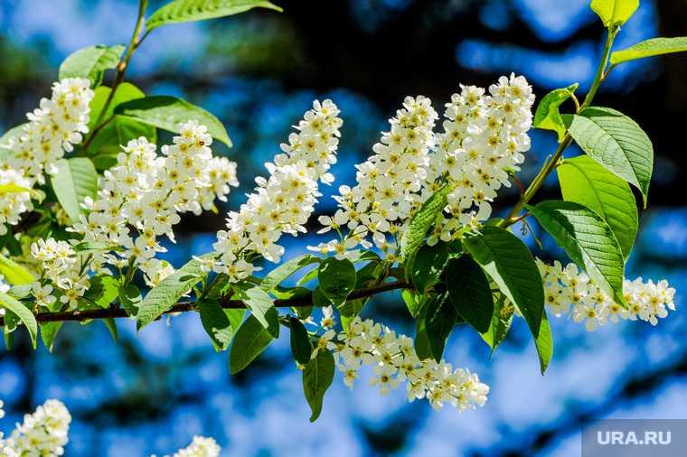 пыльца аллергия помощь