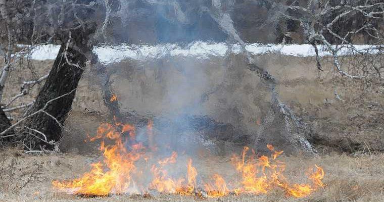 Курган шумков 10 тысяч лес поджигатели вознаграждение