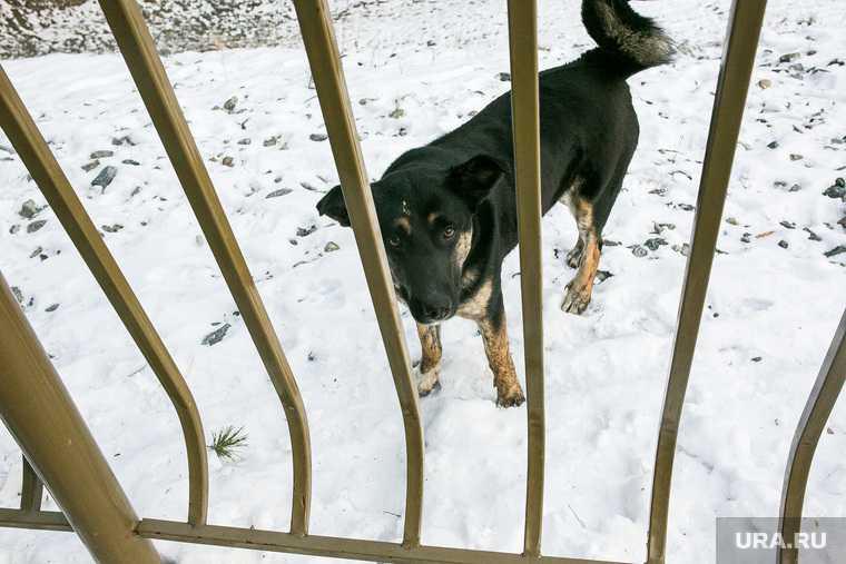 бездомные собаки отлов Свердловская область приюты для животных