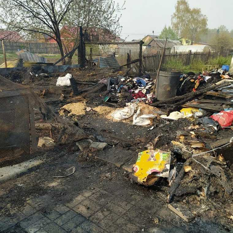 В Свердловской области сожгли приют для собак. Десятки погибших. Фото
