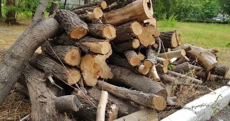 вырубили деревья Курганская область
